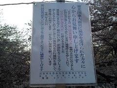 sakura20110405_03.JPG